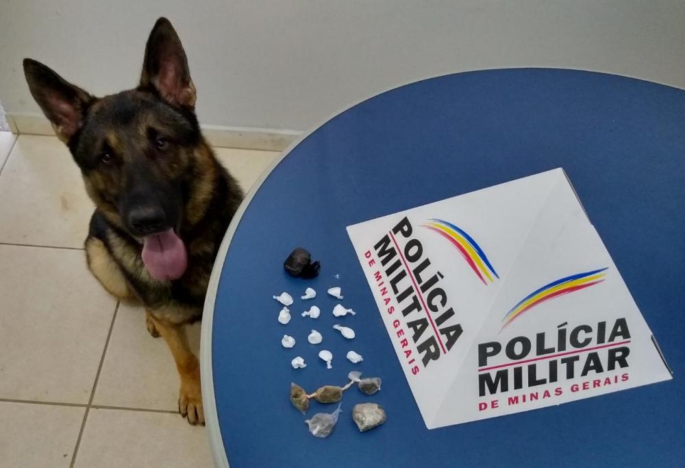 Durante operação PM apreende entorpecentes com ajuda do cão Aquiles