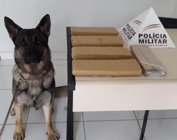 Nessa quarta-feira (24), equipes da Polícia Militar realizaram operação Viagem Segura em terminal Rodoviário de Realeza com o objetivo de localizar drogas ilícitas e armas de fogo.
