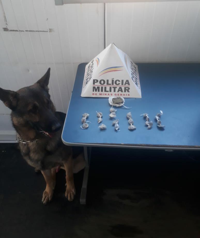 Com apoio do cão de faro Aquiles PM apreende drogas em Manhuaçu