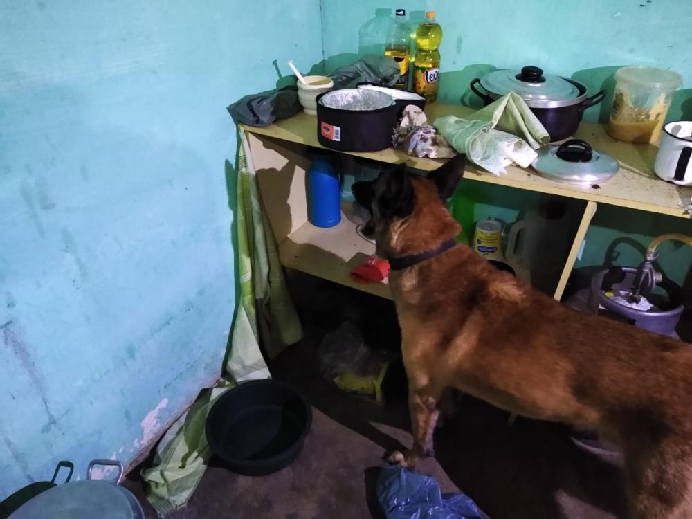 ROCCA encontra droga em vaso sanitário e na garrafa de café com ajuda do cão